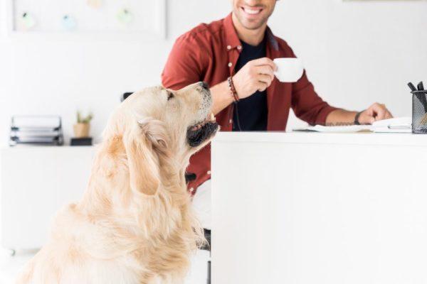 Pet-Friendly Workplaces