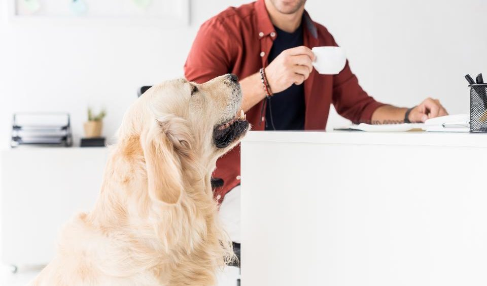 Pet-Friendly Workplaces